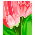 flower img